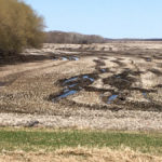 Seeding season is underway, but many producers are facing fields like this one near Somerset.