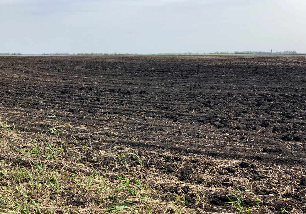 A field in the Interlake, May 23. Some fields in Manitoba are in need of rain while others have been so wet they've sunk equipment up to the axles in mud.