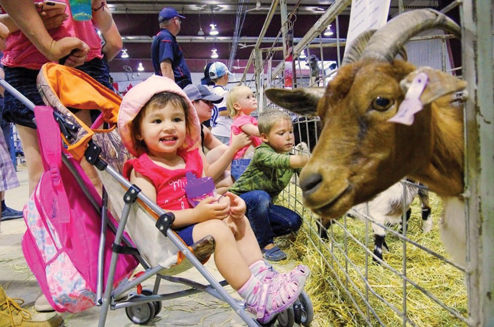 Kayci Cameron of Brandon gets acquainted with a curious goat at the 2018 Manitoba Summer Fair petting zoo.