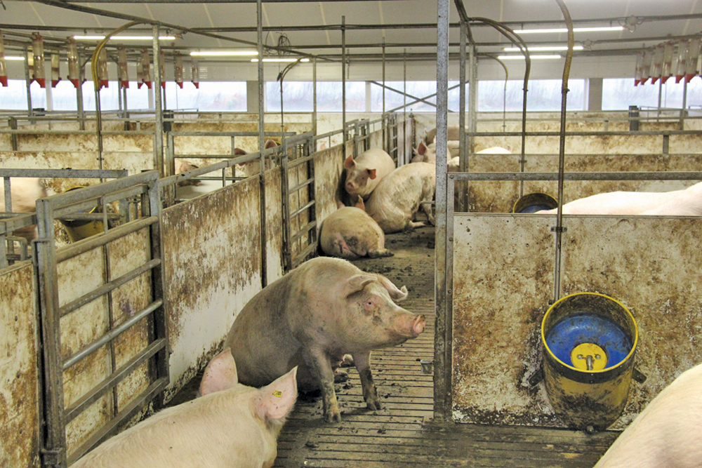 Manitoba's pork sector continues to grapple with many questions and few answers as it navigates the 'new normal.'