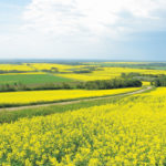 Canola market likely to move lower