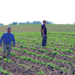 Spud growers let soil lie