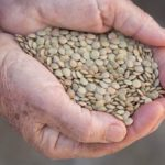 Green lentils. (Savany/iStock/Getty Images)