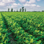 CBOT expecting large corn and soybean crops