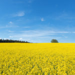 Canola markets see upside in July