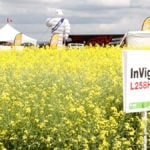 InVigor canola genetics get an upgrade