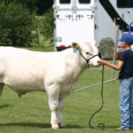One-day fairs present opportunities for youth to take hold of a lead line in the cattle or horse show ring.