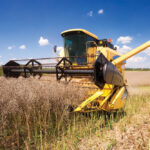 Impending harvest work is still weeks away on many parts of the Prairies but is one of several factors weighing on canola values.