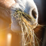 Herbicides and horses