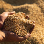 Take stock of your grain marketing plan now