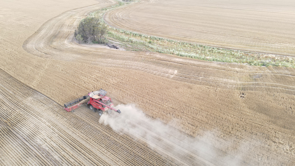 A drone photo of wheat being harvested near Moree, Australia, Oct. 27.
