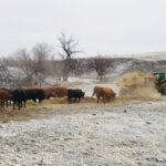 Now is the time to plan for 2021 grazing season