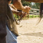 Good hoof trimming practices vital to equine health