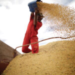 U.S. farmers celebrate soy price surge as Brazil misses out