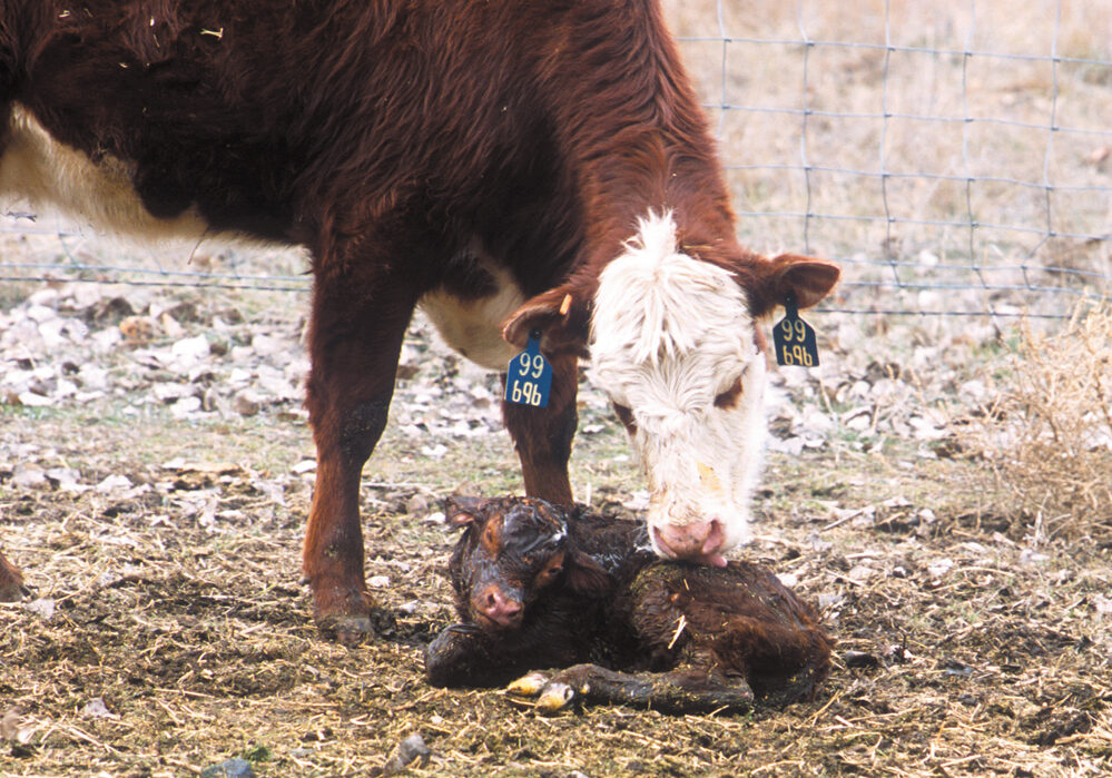 A few small changes can compound and really build the bottom line of cow-calf operations.