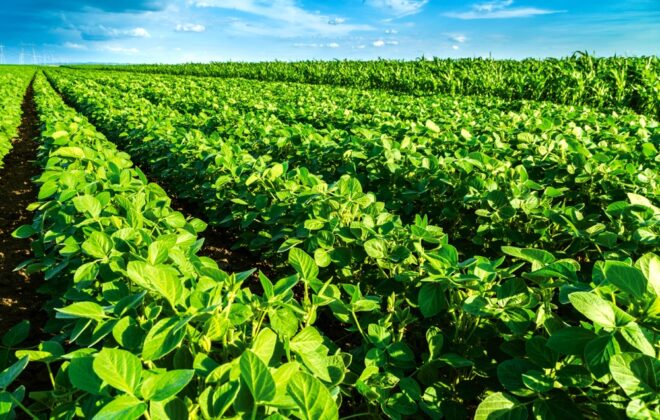 Dryness looms over South American crops