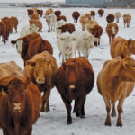 Livestock sector benefiting from mild winter weather