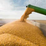 Brazil 2021 corn exports seen falling to 32 million tonnes