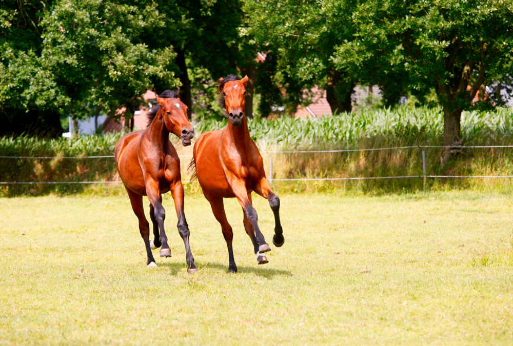Yearlings are like early teens — they can be physically mature, but they still have plenty of maturing to do.