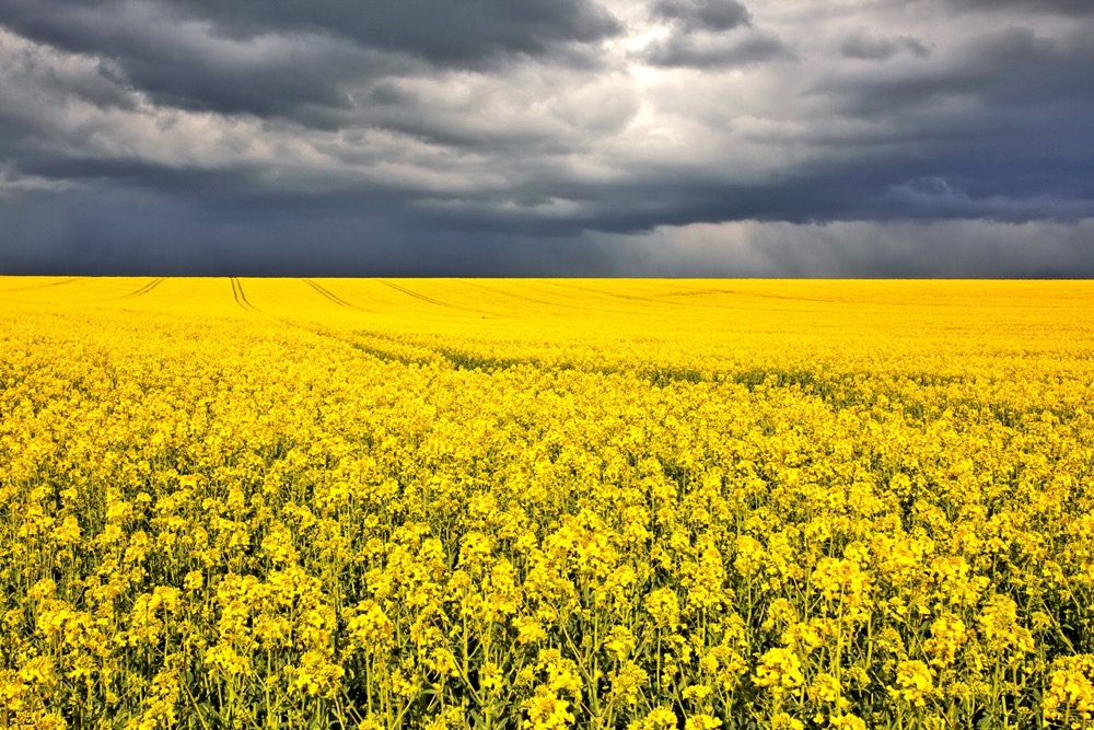 About 90 per cent of Manitoba's cultivated acres are covered under AgriInsurance.