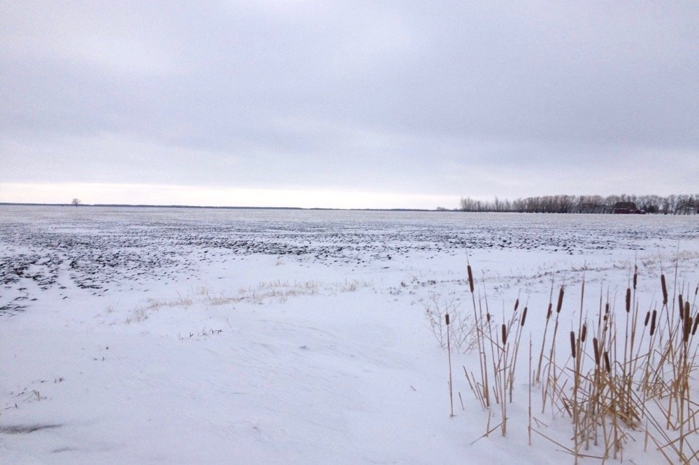 Snow cover in southern Manitoba has been sparse this winter, as shown across this field east of Starbuck, Man. (MarketsFarm photo by Glen Hallick)