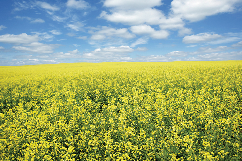 Canola Council of Canada's Market Access Plan