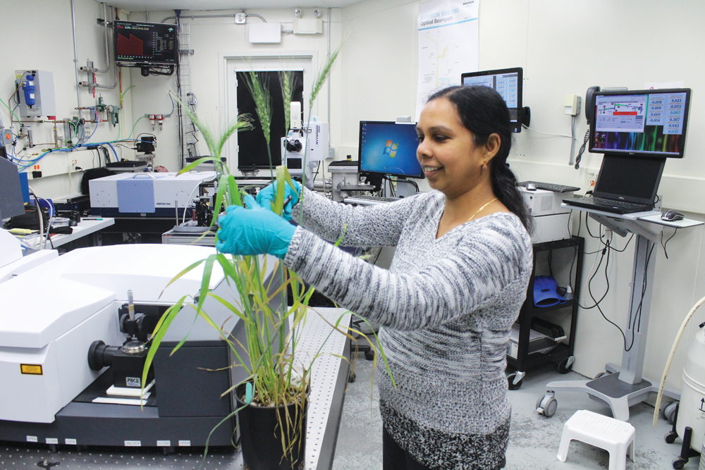 Chithra Karunakaran prepares a plant for imaging at the Canadian Light Source.