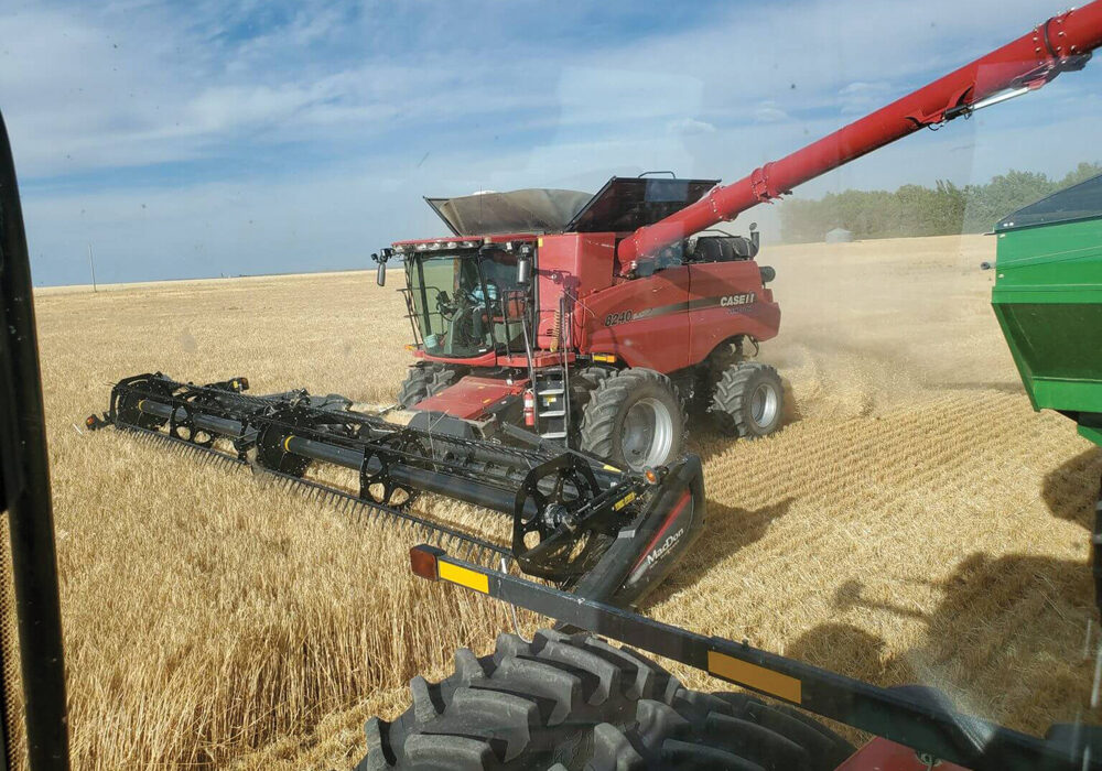 This photo from barleyharvest.ca shows AC Bow — one of three newer varieties being recommended for growers this year — being harvested near Lethbridge late last summer. Although only accounting for 2.7 per cent of malt acres last year, AC Bow moved up to fifth spot in popularity. Another recommended variety, AAC Connect, took fourth spot at 5.2 per cent of acres while the third, CDC Fraser, was in seventh place (2.1 per cent of acres).