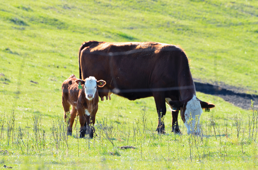 Forage insurance changes arrive for spring