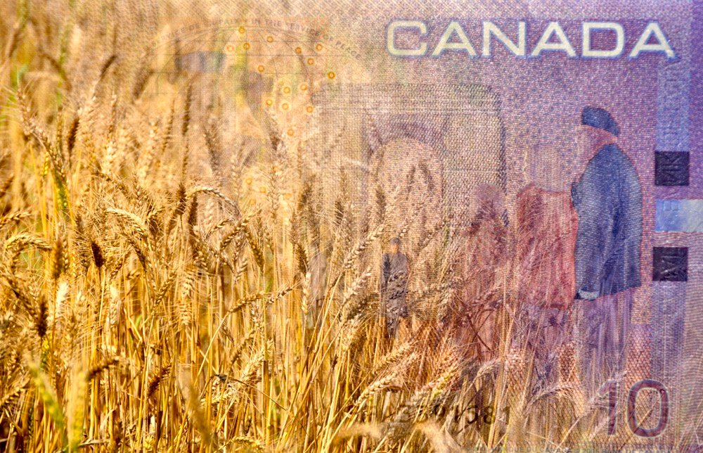 """APAS has estimated the cost of producing an acre of wheat will increase by $12.50 by the time the carbon tax is fully implemented in 2030."" – Todd Lewis, APAS."