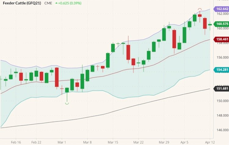 CME August 2021 feeder cattle (candlesticks) with Bollinger bands (20,2) and 100-day moving average (black line). (Barchart)