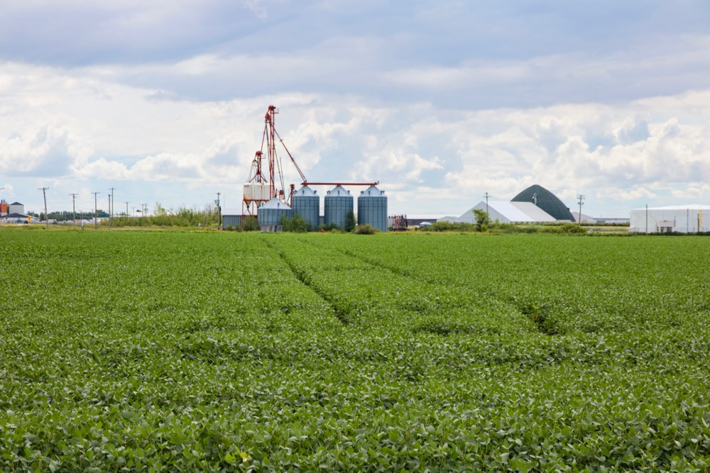File photo of a green soybean crop south of Winnipeg. (Dougall_Photography/iStock/Getty Images)