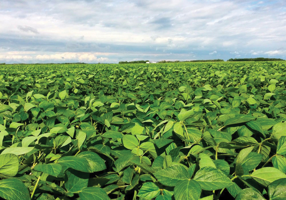 Soybean growers need to be aware that a number of older varieties are about to see their registration cancelled at the start of the new crop year, August 1.