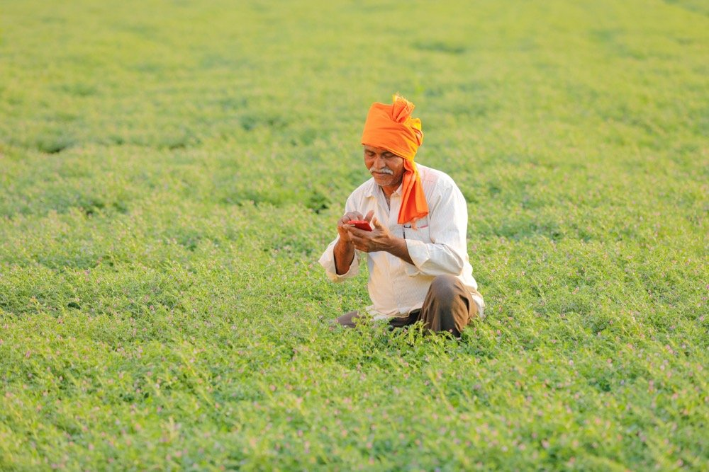 File photo of a chickpea crop in India. (Nikhil Patil/iStock/Getty Images)