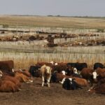(Photo courtesy Canada Beef Inc.)