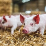 Comment: Agriculture, the environment, and animal care