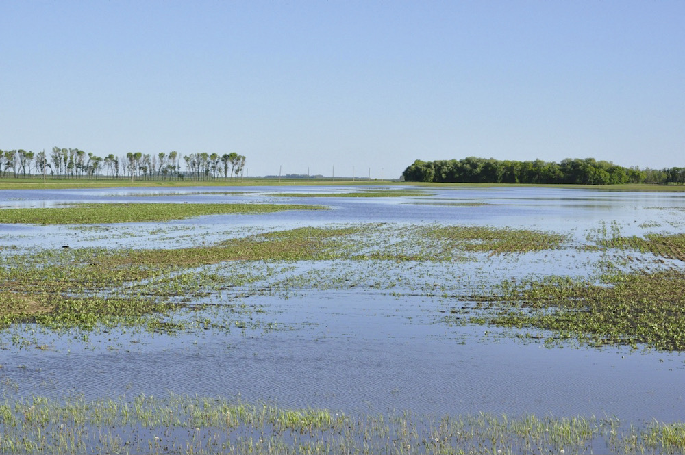 Parts of southern Manitoba saw up to three inches of much-needed precipitation on June 8-9.